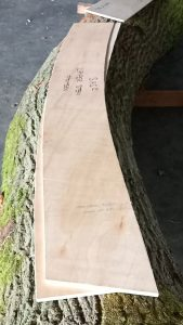 pattern on the curved log